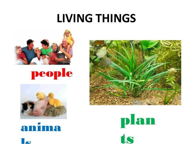 Plants are living things for Things in soil