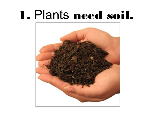 Plants are living things for Soil 7 days to die