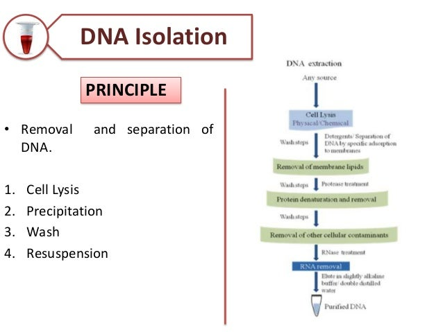 polymerase chain reaction methods principles and application pdf