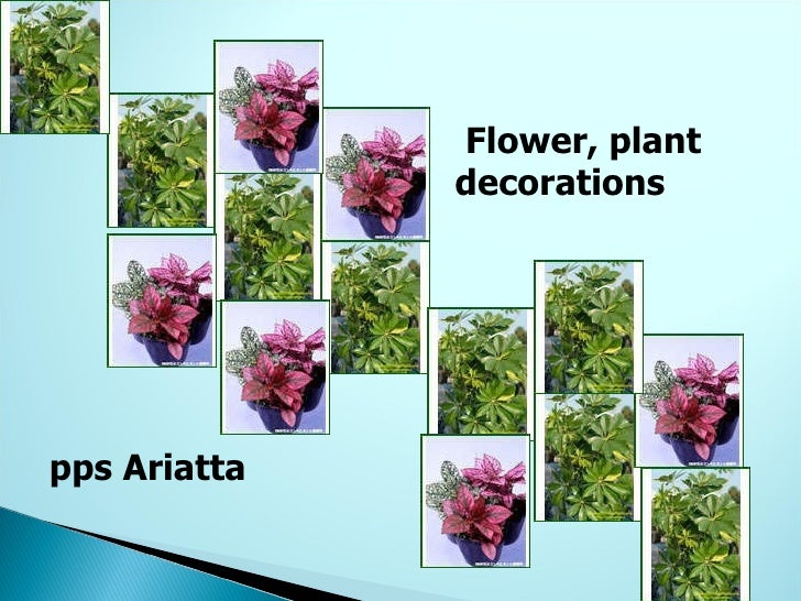 Flower, plant decorations pps Ariatta