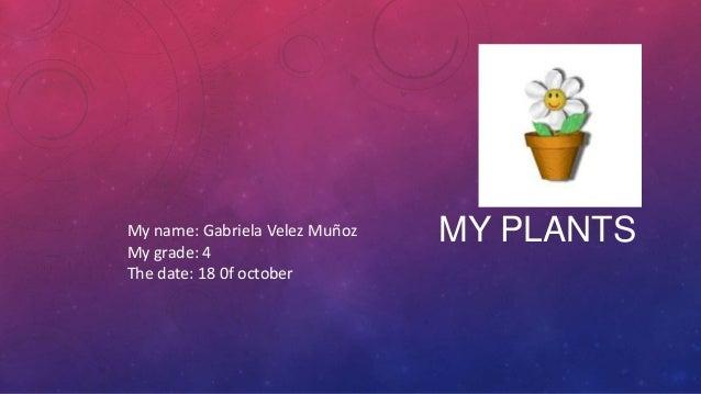 My name: Gabriela Velez Muñoz My grade: 4 The date: 18 0f october  MY PLANTS
