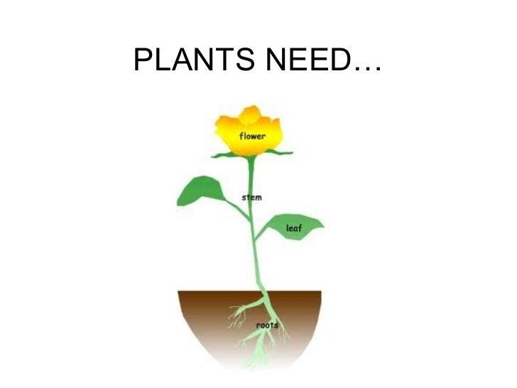 PLANTS NEED…