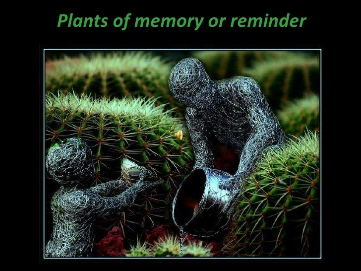 Plants of memory or reminder<br />