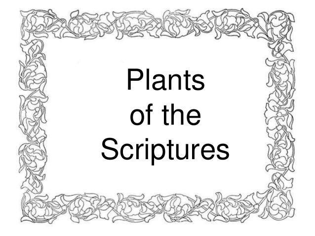Plants  of theScriptures