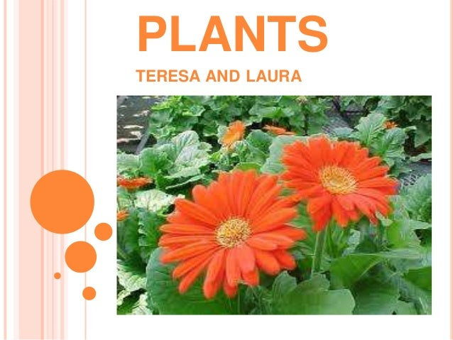 Plants teresa and laura s