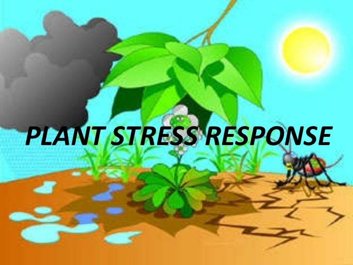 plants responses into water stress