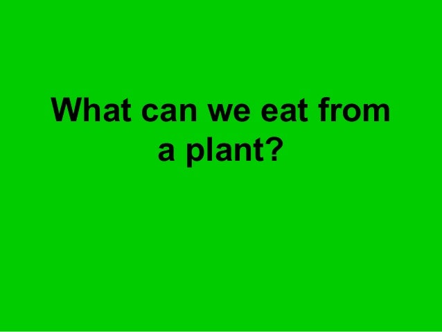 What can we eat from a plant?