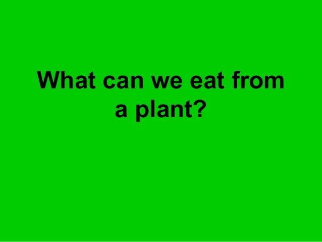 Plants we eat blog