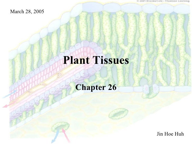 Plant Tissues Chapter 26 Jin Hoe Huh March 28, 2005