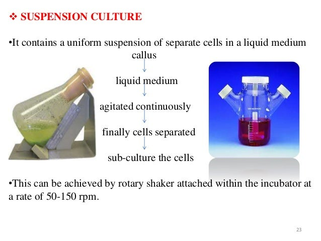 suspension culture in plant tissue culture Group 4 project - cell culture from plant tissue culture now has direct commercial mutagenesis and selection of cell lines in cell suspension culture.