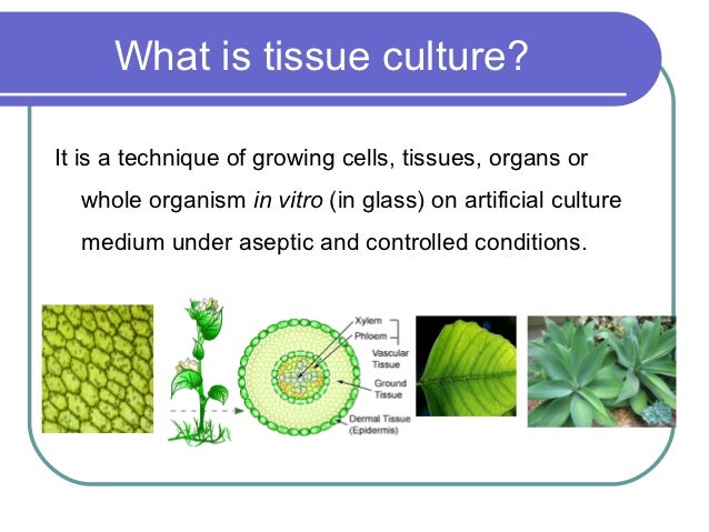 Essay on Plant Tissue Culture | Botany