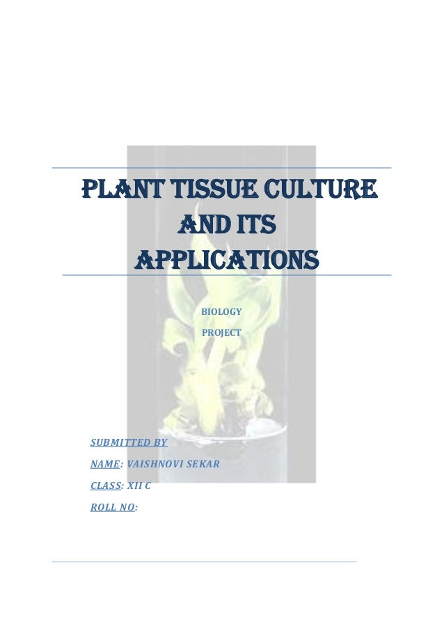 PLANT TISSUE CULTURE AND ITS APPLICATIONS BIOLOGY PROJECT  SUBMITTED BY NAME: VAISHNOVI SEKAR CLASS: XII C ROLL NO:
