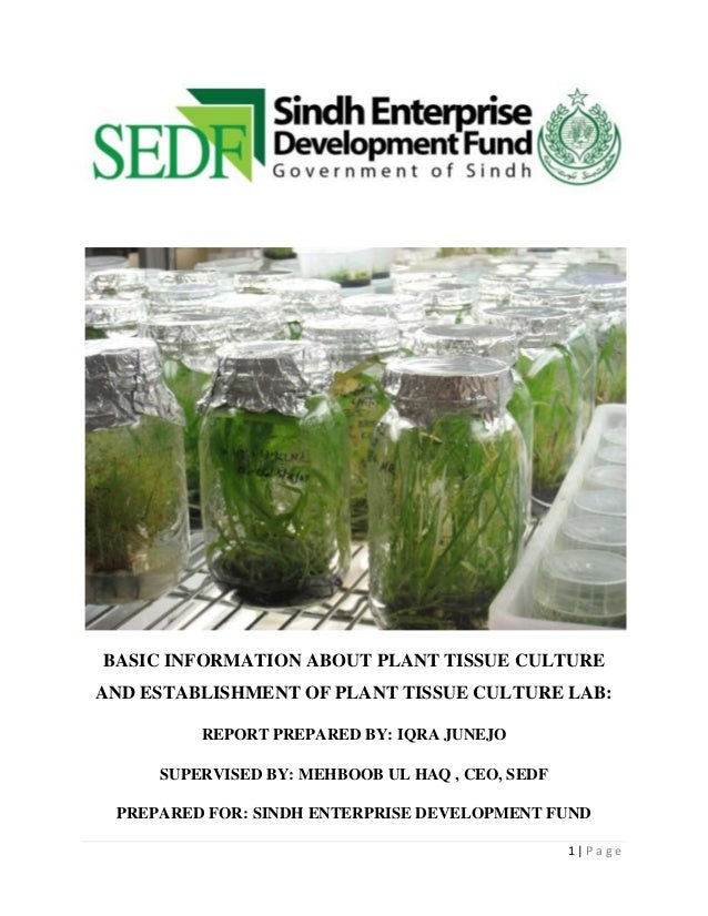 BASIC INFORMATION ABOUT PLANT TISSUE CULTURE AND ESTABLISHMENT OF PLANT TISSUE CULTURE LAB: REPORT PREPARED BY: IQRA JUNEJ...