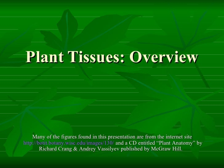 Plant Tissues: Overview Many of the figures found in this presentation are from the internet site  http://botit.botany.wis...
