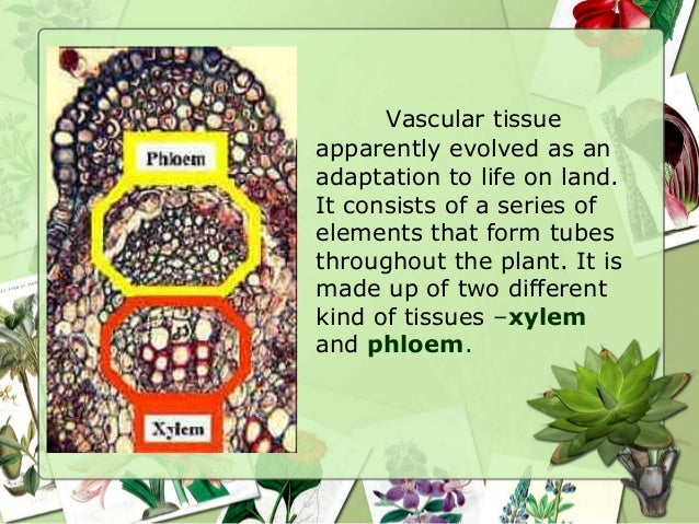 Plant Tissue Systems  ThoughtCo