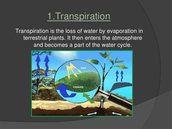 Plant transpiration
