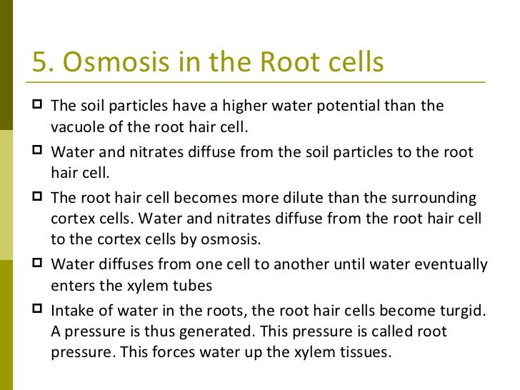 Osmosis in Plant Roots Osmosis in The Root Cells