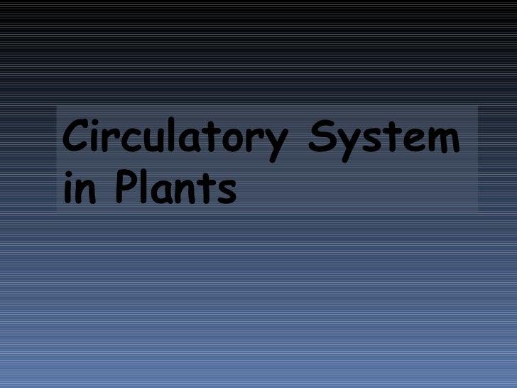 Circulatory System in Plants