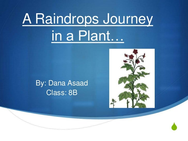 A Raindrops Journey in a Plant…<br />By: Dana Asaad<br />Class: 8B<br />
