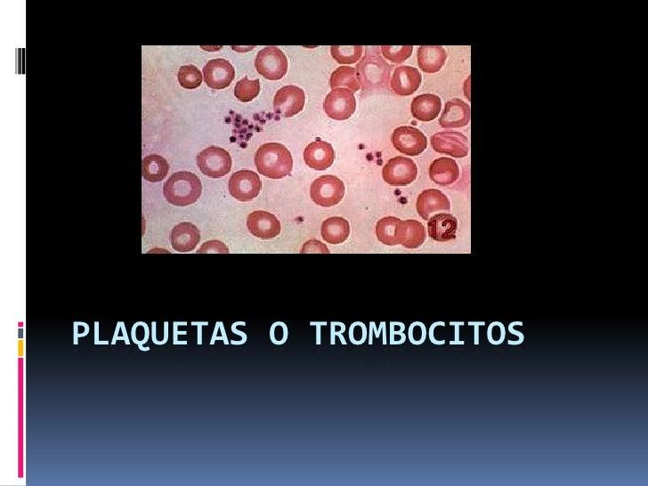 Plaquetas o trombocitos<br />