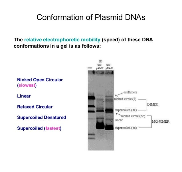 dna electrophoresis lab essay Lab 1 osmosis introduction key concepts concept 1: you will use gel electrophoresis to separate samples of dna that have.
