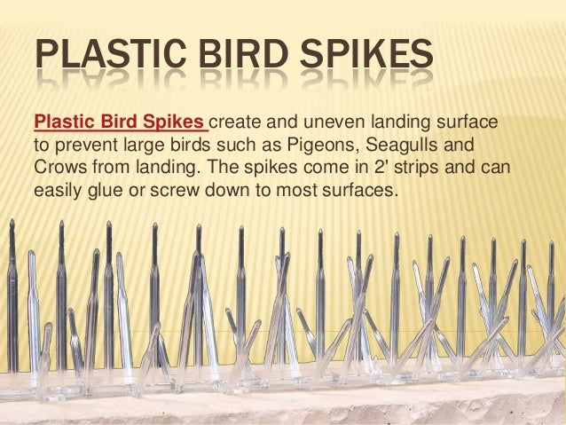 PLASTIC BIRD SPIKES Plastic Bird Spikes create and uneven landing surface to prevent large birds such as Pigeons, Seagulls...
