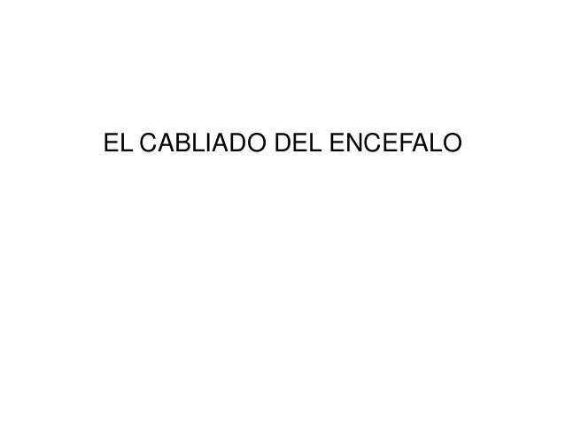 EL CABLIADO DEL ENCEFALO