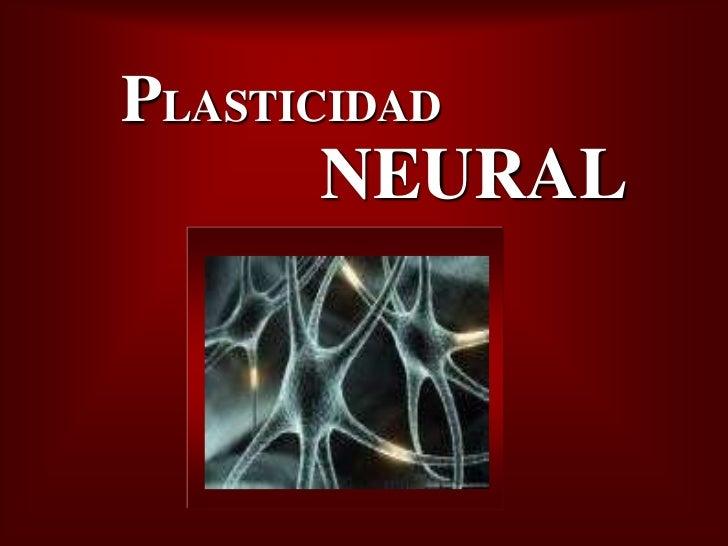 Bienvenidos al nuevo foro de apoyo a Noe #271 / 30.06.15 ~ 03.07.15 - Página 38 Plasticidad-neural-1-728