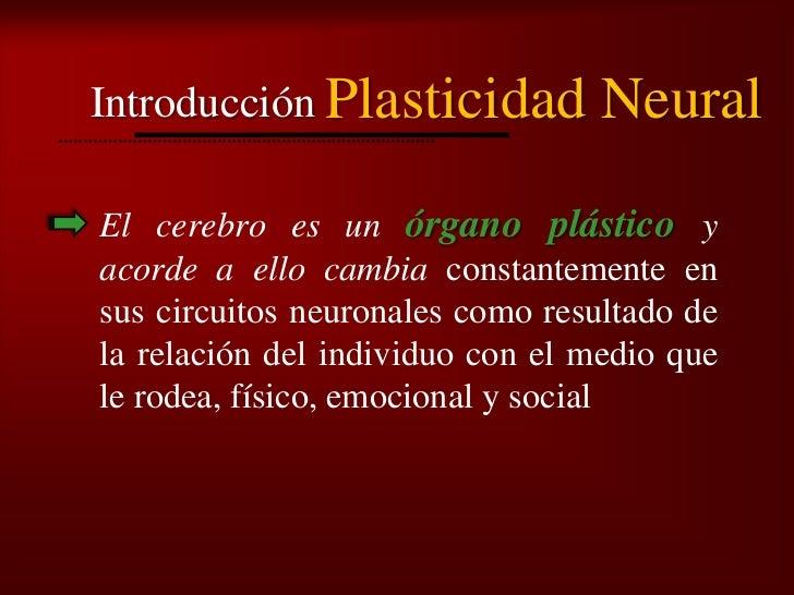 Bienvenidos al nuevo foro de apoyo a Noe #271 / 30.06.15 ~ 03.07.15 - Página 38 Plasticidad-neural-4-728