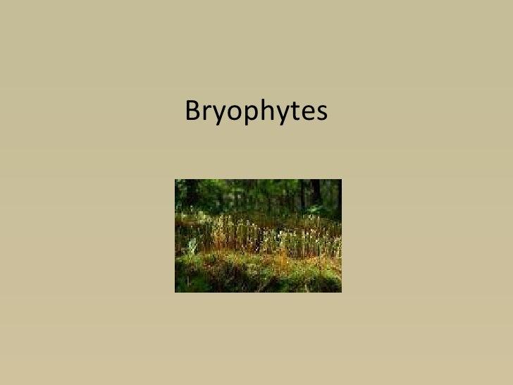 Plats pt3  bryophytes