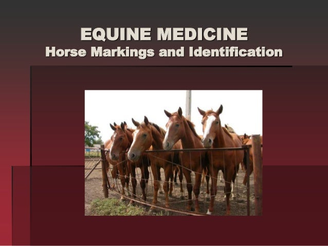 EQUINE MEDICINE Horse Markings and Identification