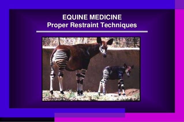 EQUINE MEDICINE Proper Restraint Techniques