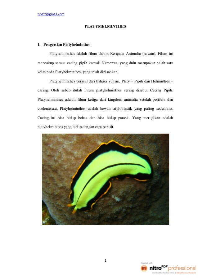 Platymelminthes