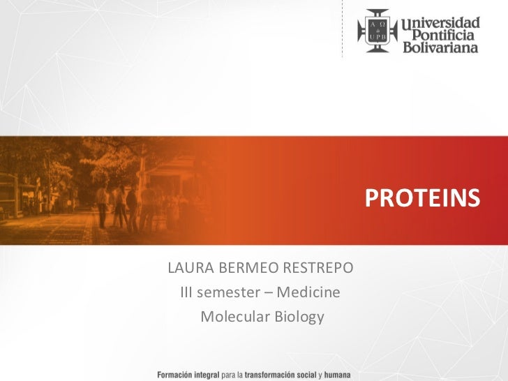 PROTEINS LAURA BERMEO RESTREPO  III semester – Medicine  Molecular Biology