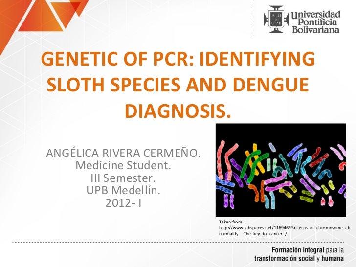 GENETIC OF PCR: IDENTIFYINGSLOTH SPECIES AND DENGUE        DIAGNOSIS.ANGÉLICA RIVERA CERMEÑO.    Medicine Student.       I...