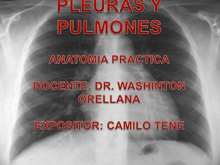 PLEURASCada     pulmón     esta recubierto y encerrado en un saco pleural seroso que consiste en dos membranas continuas: ...