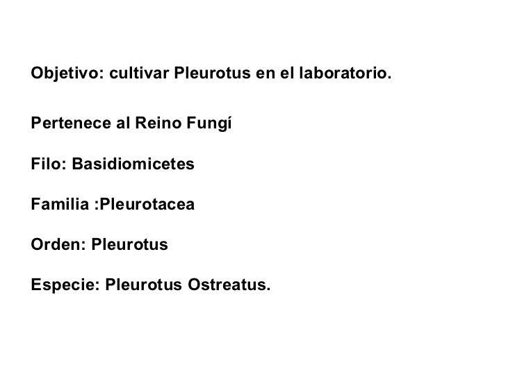 Objetivo: cultivar Pleurotus en el laboratorio. Pertenece al Reino Fungí  Filo: Basidiomicetes  Familia :Pleurotacea Orden...