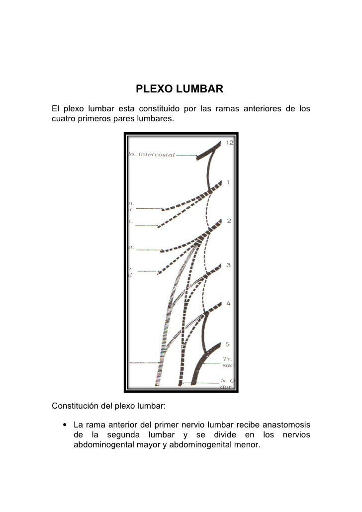 PLEXO LUMBAR El plexo lumbar esta constituido por las ramas anteriores de los cuatro primeros pares lumbares.     Constitu...