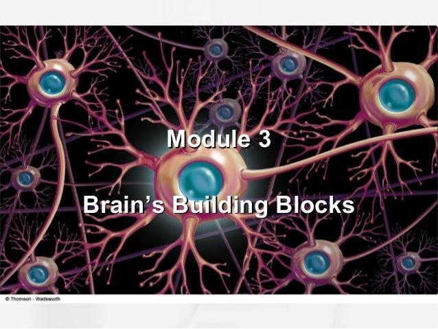 Module 3Module 3 Brain's Building BlocksBrain's Building Blocks