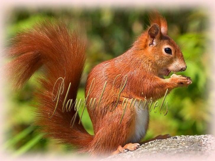 Playful squirrels