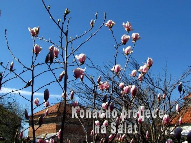 Napokon proljeće