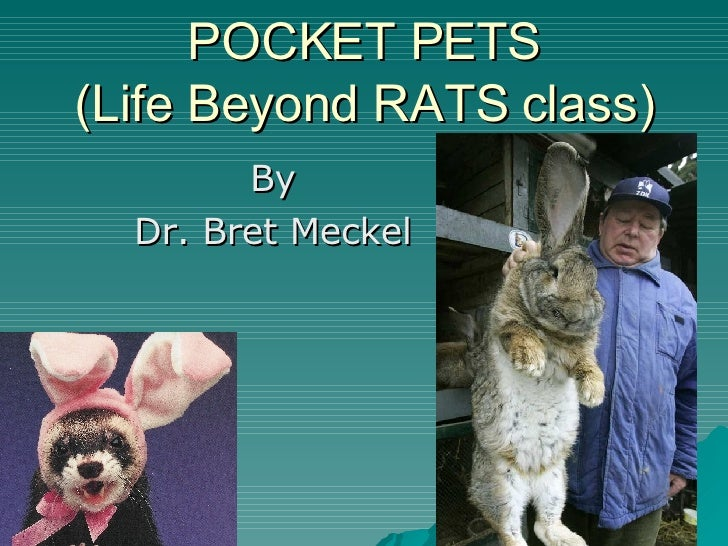 POCKET PETS (Life Beyond RATS class) By Dr. Bret Meckel