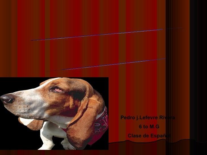 Pedro j.Lefevre Rivera  6 to M.G Clase de Español POEMARIO ELECTRÓNICO ¡Los Animales me encantan!