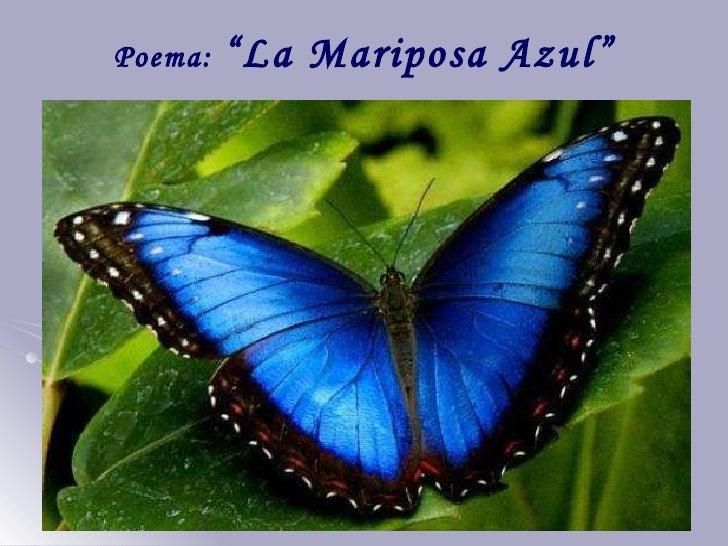 """Poema:  """"La Mariposa Azul"""""""