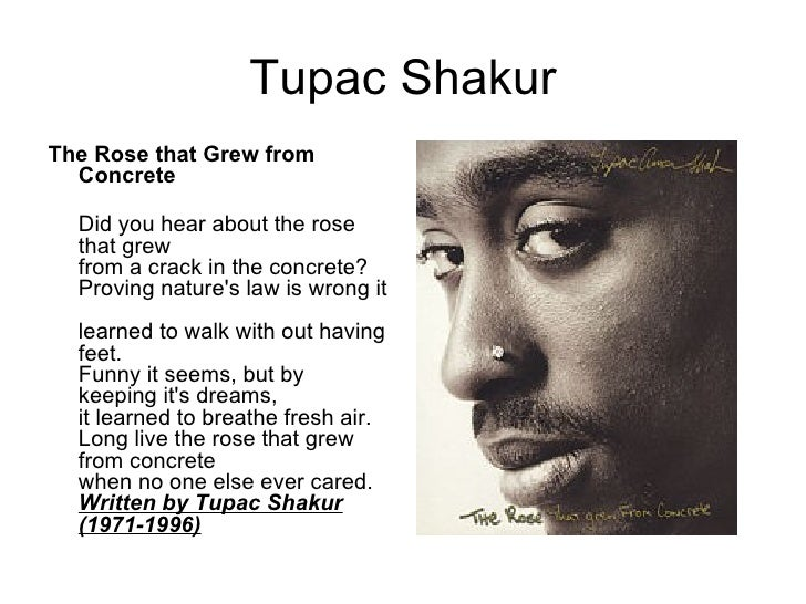 tupac shakur s the rose that grew Notorious 25-year-old gangsta mc and actor tupac shakur was shot and killed before he had a chance to fulfill  the rose that grew from  shakur's third album, me.