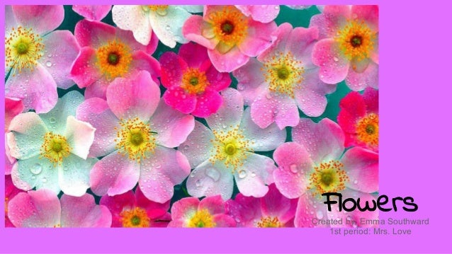 FlowersCreated by: Emma Southward 1st period: Mrs. Love