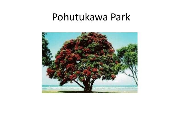Pohutukawa park draft plan