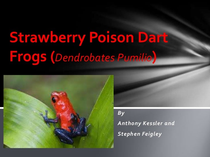 Strawberry Poison DartFrogs (Dendrobates Pumilio)                  By                  Anthony Kessler and                ...