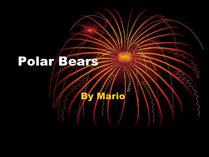 Polar Bears  By Mario