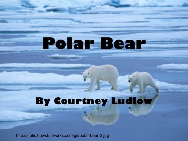 Polar Bear By Courtney Ludlow http://static.howstuffworks.com/gif/polar-bear-2.jpg